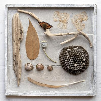 Still Life, Frame, Collection, Natural Materials-Andrea Haase-Photographic Print