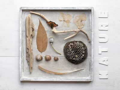 Still Life, Frames, Collection, Natural Materials-Andrea Haase-Photographic Print