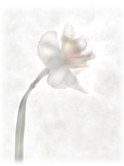 Still Life of a Flower-Joyce Tenneson-Photographic Print