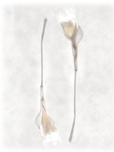 Still Life of Two Flowers-Joyce Tenneson-Photographic Print