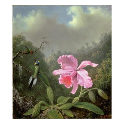 Still Life with an Orchid and a Pair of Hummingbirds, C.1890S-Martin Johnson Heade-Giclee Print