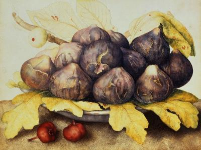 Still Life with Bowl of Figs, c.1650-Giovanna Garzoni-Giclee Print