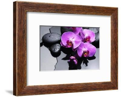 Still Life with Pebbles and Branch Orchid-crystalfoto-Framed Photographic Print