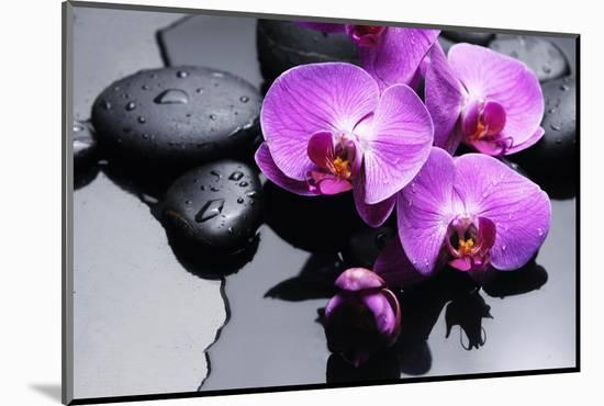 Still Life with Pebbles and Branch Orchid-crystalfoto-Mounted Photographic Print