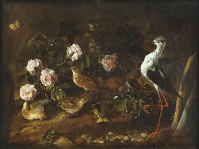 Still Life with Quail, an Owl and a Black-Winged Stilt, C.1656-Paolo Porpora-Giclee Print