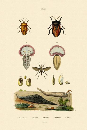 Stink Bugs, 1833-39--Giclee Print