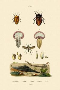 Stink Bugs, 1833-39