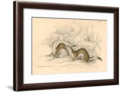 Stoat (Mustela Ermine), Member of the Weasel Family, 1828--Framed Giclee Print