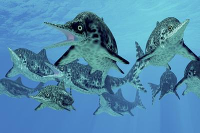 A Group of Ichthyosaurs Swimming in Prehistoric Waters by Stocktrek Images
