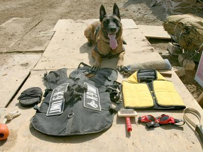 A Military Police Dog Sits Beside His Issued Protective Gear