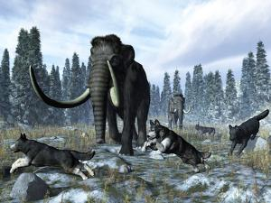 A Pack of Dire Wolves Crosses Paths with Two Mammoths During the Upper Pleistocene Epoch by Stocktrek Images