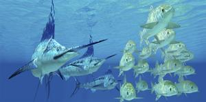 A School of Ayu Fish Try to Escape from Three Carnivorous Blue Marlins by Stocktrek Images