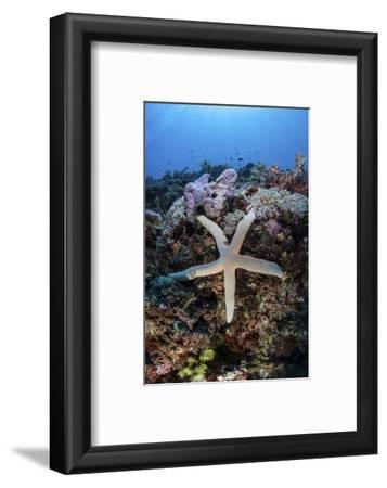 A Sea Star Clings to a Diverse Reef Near the Island of Bangka, Indonesia