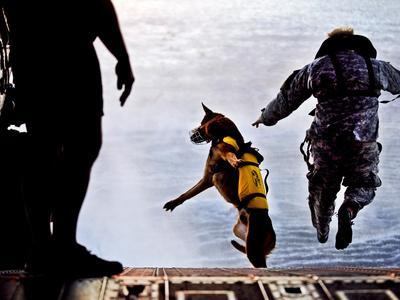 A U.S. Soldier And His Military Working Dog Jump Off the Ramp of a CH-47 Chinook
