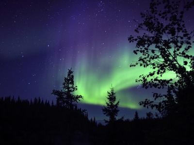 Aurora Borealis Above the Trees, Northwest Territories, Canada