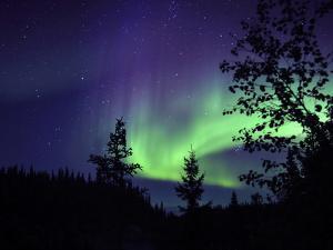 Aurora Borealis Above the Trees, Northwest Territories, Canada by Stocktrek Images