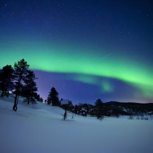 Aurora Borealis and a Shooting Star in the Woods of Troms County, Norway by Stocktrek Images
