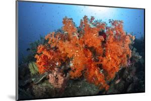 Beautiful Soft Corals and Invertebrates on a Reef in Indonesia by Stocktrek Images