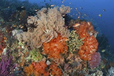 Bright Sponges, Soft Corals and Crinoids in a Colorful Komodo Seascape by Stocktrek Images