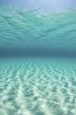 Bright Sunlight Ripples across a Seafloor in the Tropical Pacific Ocean by Stocktrek Images