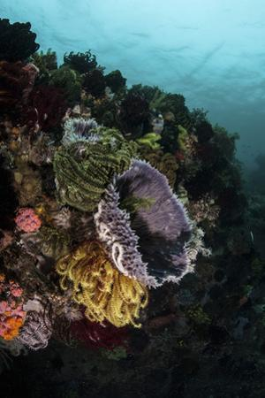 Colorful Crinoids and Sponges Grow on a Vibrant Reef in Indonesia by Stocktrek Images