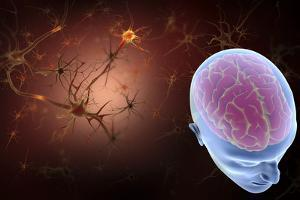 Conceptual Image of Human Brain with Neurons by Stocktrek Images