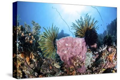 Crinoids Cling to a Large Sponge on a Healthy Coral Reef