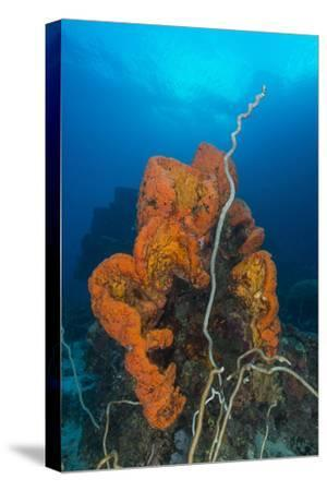 Curly Bright Orange Sponge with Greyish Whip Coral