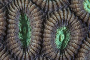 Detail of Coral Polyps on a Reef in Lembeh Strait by Stocktrek Images