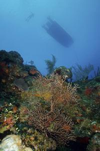 Diver and Boat Above Black Coral Bushes in French Cay, Turks and Caicos by Stocktrek Images