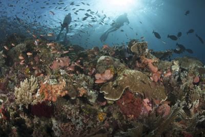 Diver Looks on at Sponges, Soft Corals and Crinoids in a Colorful Komodo Seascape by Stocktrek Images