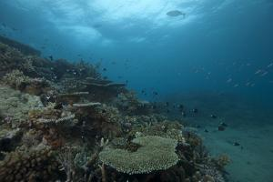 Healthy Corals Cover a Reef in Beqa Lagoon, Fiji by Stocktrek Images