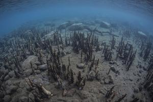 Mangrove Roots Rise from the Seafloor of an Island in Indonesia by Stocktrek Images