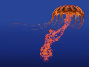 Orange Jellyfish Illustration by Stocktrek Images