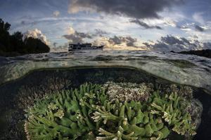 Reef-Building Corals Thrive on a Reef in the Solomon Islands by Stocktrek Images