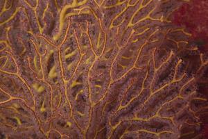 Soft Coral Polyps Feeding, Beqa Lagoon, Fiji by Stocktrek Images