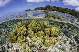 Soft Corals Grow on the Edge of Palau's Barrier Reef by Stocktrek Images