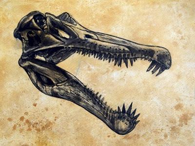 Spinosaurus Dinosaur Skull by Stocktrek Images
