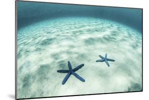 Starfish on a Brightly Lit Seafloor in the Tropical Pacific Ocean by Stocktrek Images