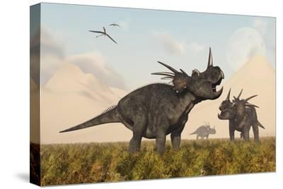 Styracosaurus Dinosaurs Calling Out to Each Other