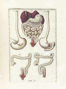 The Science of Human Anatomy by Bartholomeo Eustachi by Stocktrek Images