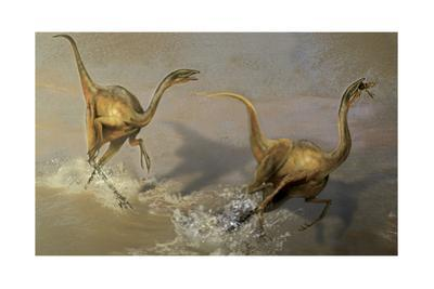 Two Struthiomimus Chasing Each Other in a Fight for the Lobster by Stocktrek Images