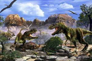 Two T-Rex Dinosaurs Fighting over a Dead Carcass by Stocktrek Images