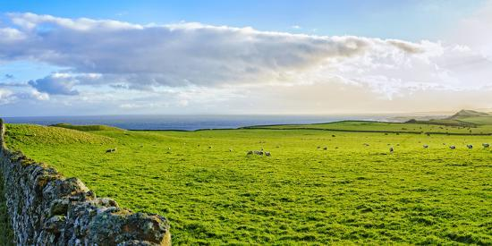 Stone fence along pasture with Sheep grazing, Moray Firth near Brora, Scotland-Panoramic Images-Photographic Print