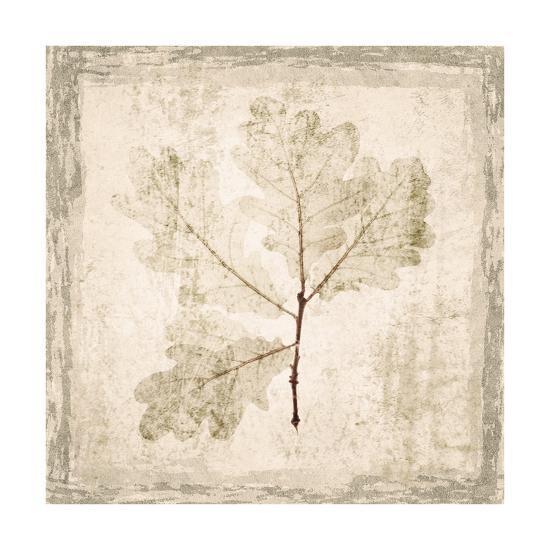 Stone Leaf III-Irena Orlov-Art Print
