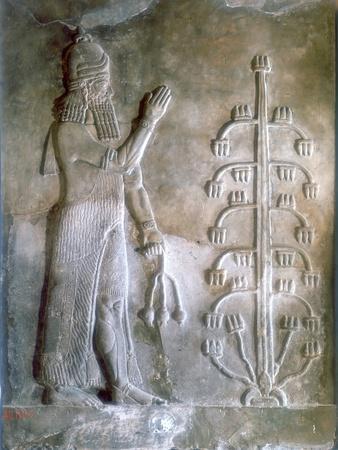 https://imgc.artprintimages.com/img/print/stone-relief-of-sargon-i-standing-before-a-tree-of-life-24th-23rd-century-bc_u-l-ptl0ks0.jpg?p=0