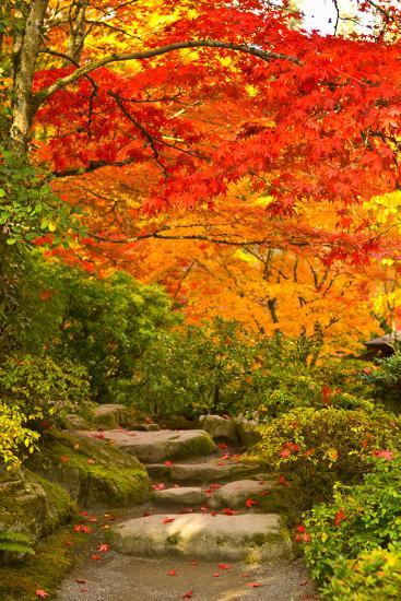 Stone Steps In A Forest In Autumn Washington State Usa Photographic Print Art Com
