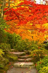 Stone Steps in a Forest in Autumn, Washington State, USA