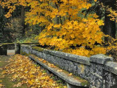 Stone Wall Framed by Big Leaf Maple, Columbia River Gorge, Oregon, USA-Jaynes Gallery-Photographic Print