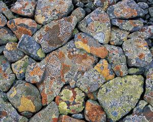 Stones With Algae And Lichen